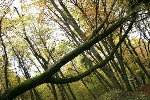 Broken Tree in Forest
